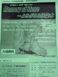 20090808 扶桑木