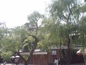20090821堀のヤナギ5