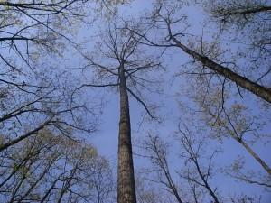 20100514 木のファン感謝デー⑤