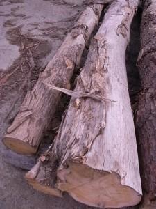 20100823 バニラ香る将棋盤の木①