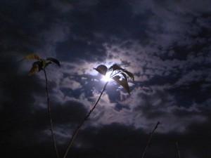20100923 月の桂も茂る秋
