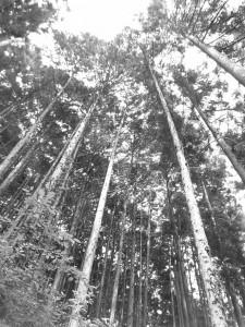 20101102 日本の隠された財産・スギ⑥