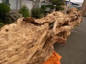 20101111 炎の巨樫、コッコ・サンに立つ!②