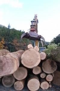20101120 巨大樅、山より出づる・・・1④