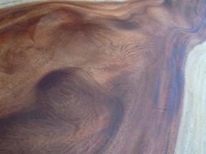 20110502 雨にも映える、雨を予知する木④
