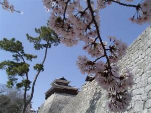 20110609 殿、葵の御紋とコラボでござる!④