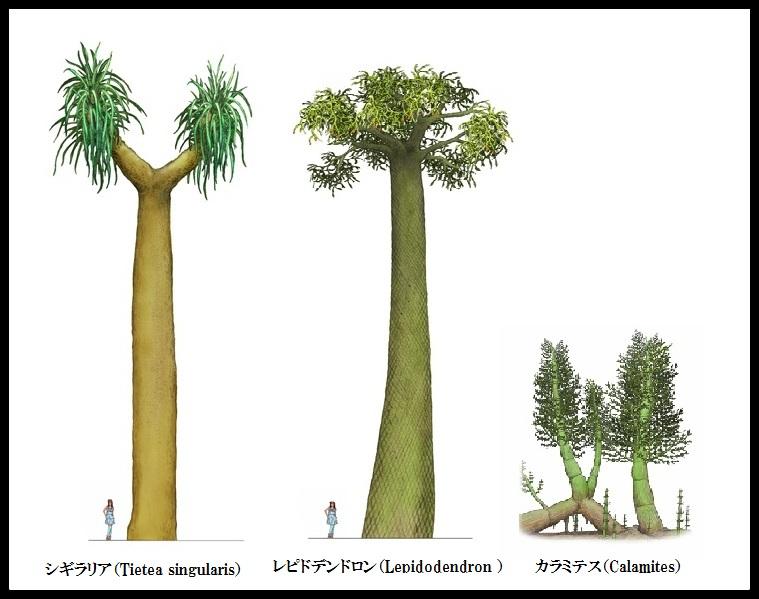 森のかけら | 大五木材 | 古代植物シギラリアと封印木 | 森のかけら ...
